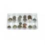 Lindner Sammelbox transparent, 12 feste Fächer, einzeln 4822