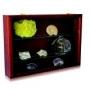 Safe Holz-Vitrine MAXI Nr. 5927 für Klein-Sammelgegenstände